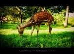 My Dear Deer...!!